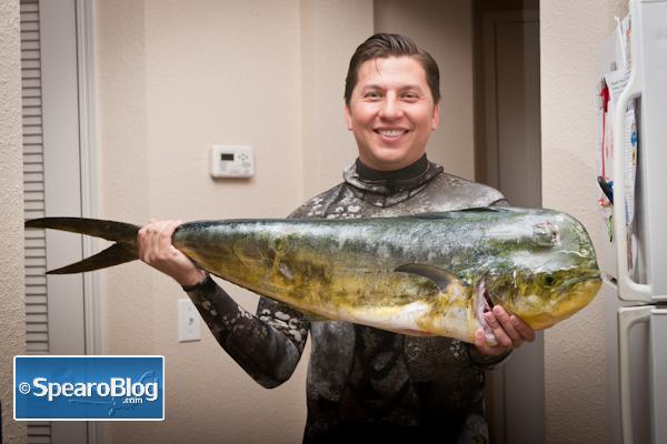 Dorado-Spearfishing-9-8-13-1