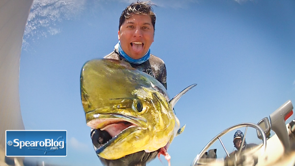 Dorado-Spearfishing-9-8-13-2