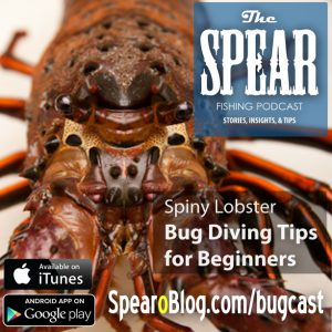 the-spear-bug-diving-primer